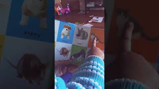 24 month old identifying 100 animals !!