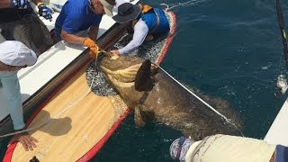 Grouper Extreme Saltwater Fishing Channel - Largest Fish Ever Caught Paddle Board! Huge Fish Caught