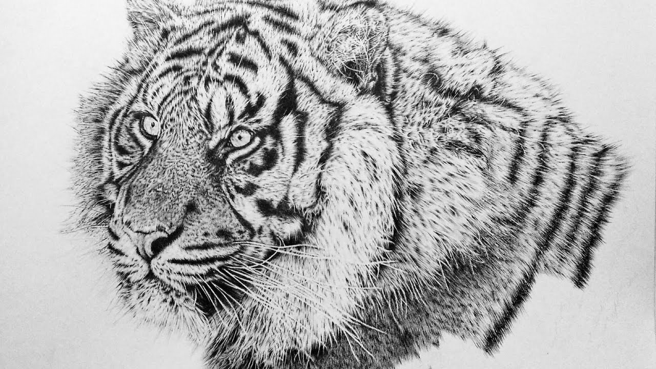 How To Draw A Realistic Animal