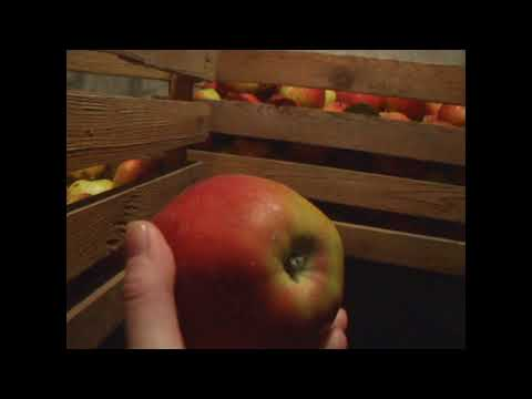 Как хранятся овощи и фрукты в моём подвале!