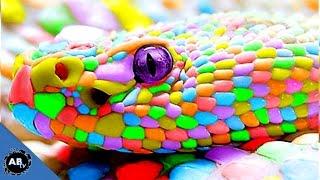 Colorful Giant Snakes! SnakeBytesTV Ep. 413 : AnimalBytesTV