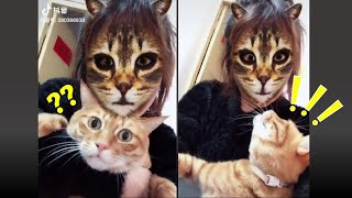 🤣Cats Scared Of Cat Mask Filter Part# 3
