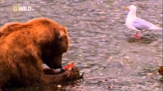 Самые Странные в Мире: Чудаки в Небе (Nat Geo Wild на русском языке) HD