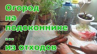 Повторное выращивание или вторая жизнь овощей. Огород на подоконнике из отходов.