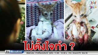 ข่าวเที่ยงอมรินทร์ : สลด! แมวดิ้นด้วยความทรมานถูกน้ำยาขัดพื้นสาด อ้างไม่ได้ตั้งใจ (130162)