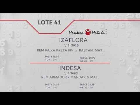 LOTE 41 Maratona Matinha