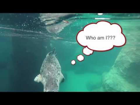 Harbor seals arrive at Oregon Zoo