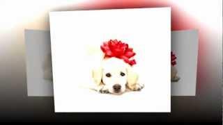 Pet Care Center | 404-793-5595 | Georgia 30305 | Dog Day Care Services | Budget Dog Training Center