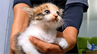 Rescued Kittens Angry & Hissing When Introduced To Older Kitten For The First Time  Cats Meowing