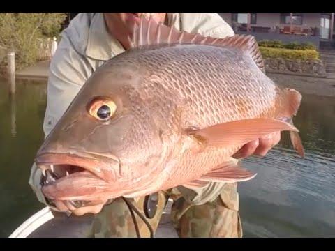 Mangrove Jack Fishing