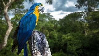 Amazing Rainforest: Life of Tropical Animals - Documentary Videos