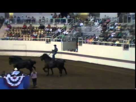 Mid America Draft Pony Show Chase Goodwin Riding Horses--2015 Indiana State Fair