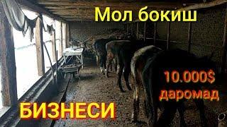 УЗБда 10.000$ Янги Мол Бокиш Бизнеси
