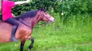 How to make a lazy horse move forward :)