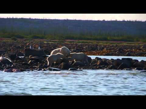 Churchill Manitoba Summer