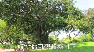 榕树下 - 余天