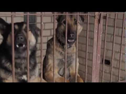 Mārtiņa Freimaņa draugi - Suns (Atbildības dienas himna)