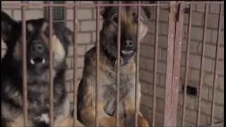 Download Mārtiņa Freimaņa draugi - Suns (Atbildības dienas himna) MP3 song and Music Video