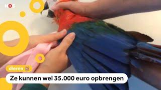 Rechtszaak vanwege het verven van papegaaien