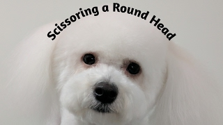Scissoring a Round Head