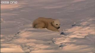 Baby Polar Bears - Frozen Planet - BBC One