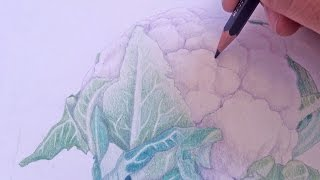 Colored Pencil Drawing Inspired by Cauliflower (w/ Roasted Cauliflower Recipe)