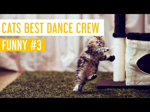 Funny Cat Videos #3 – Cats Best Dance Crew – Meow Paw