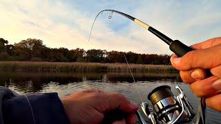ЩУКИ ЖРУТ, НЕ Ожидал столько поймать на вечерней зорьке! Рыбалка на спиннинг!