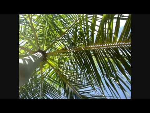 Paul Van Dyk - Otro Dia