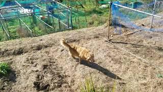 風が強くても日差しがあるとまだ暖かい今日この頃。 ジイチャンが畑仕事...