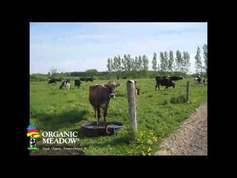 Walking the Cow Path to the Pasture- Organic Meadow Co-op member Pronk family