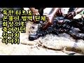 [동물이야기] 독한 타르로 온몸이 범벅된체 죽어가던 강아지
