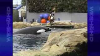 Tourist's Camera Rolls Seconds Before Killer Whale Attacks SeaWorld Trainer