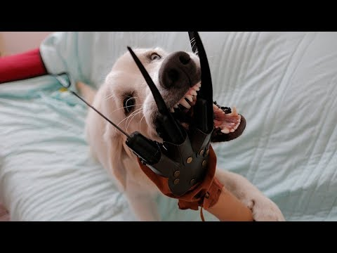 Funny Dog vs Freddy Krueger Hand Prank: Cute Puppy Bailey