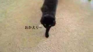 しゃべるねこ、しおちゃんの「おかえり」、でも質問は聞かない。Talking cat in Japanese thumbnail