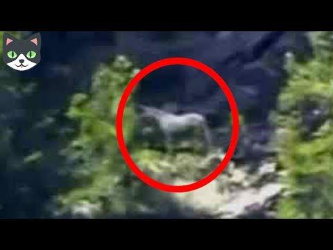 5 Unicornios Reales Captados en Cámara | Criaturas Mitológicas Captadas En Videos
