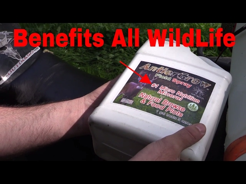 Attracting Deer To Your Property! spraying Antler Grow On Food Plots