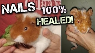 Nails 100% Healed! + Herd check in