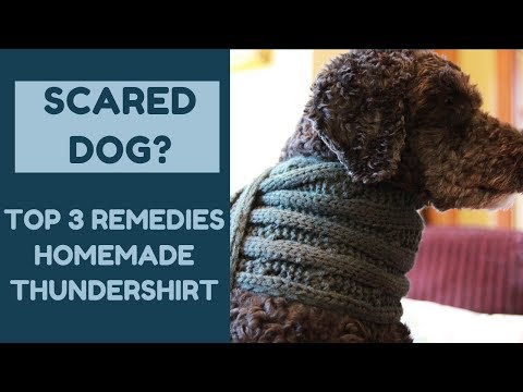 Scared Dog? Top 3 Remedies, Homemade Thundershirt