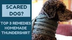 Scared Dog? Top 3 Remedies, Homemade Thundershirt