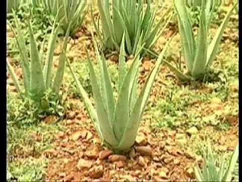 coltivazione,lavorazione e produzione.wmv