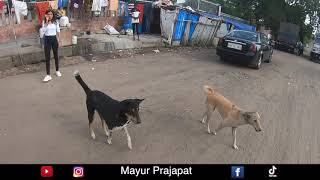जानवरों पर दया करे    dog lover mayur prajapat