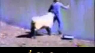 كاميرا خفيه مواقف وطرائف  اجمد خروف الاسماعيليه usa بنات sex    YouTube