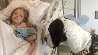 GIANT DOG APPROACHES LITTLE GIRL IN HOSPITAL BED NOW KEEP YOUR EYE ON HIS BACK