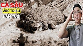 7 Câu Chuyện Kỳ Lạ Về Cá Sấu Mà Người Ta Che Giấu