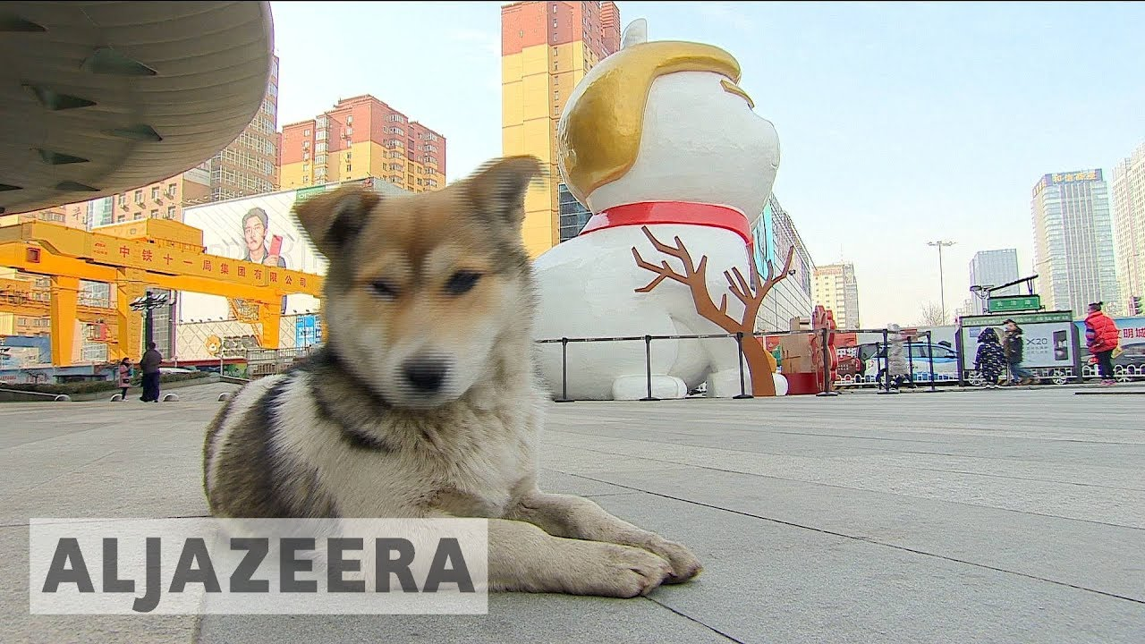 Will Trump be unlucky in the Chinese Year of the Dog?