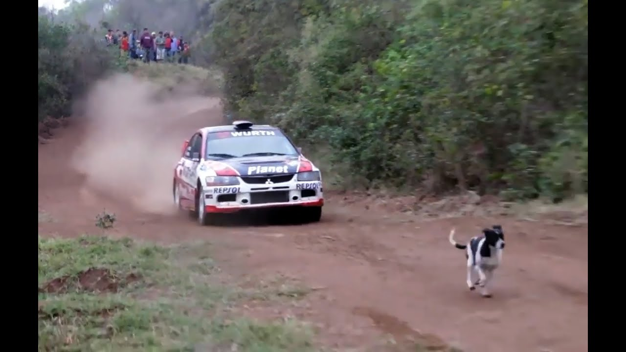 rally car jumps over dog with slow motion   youtube