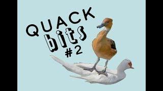 Quackbits #2: my cat hates me :(