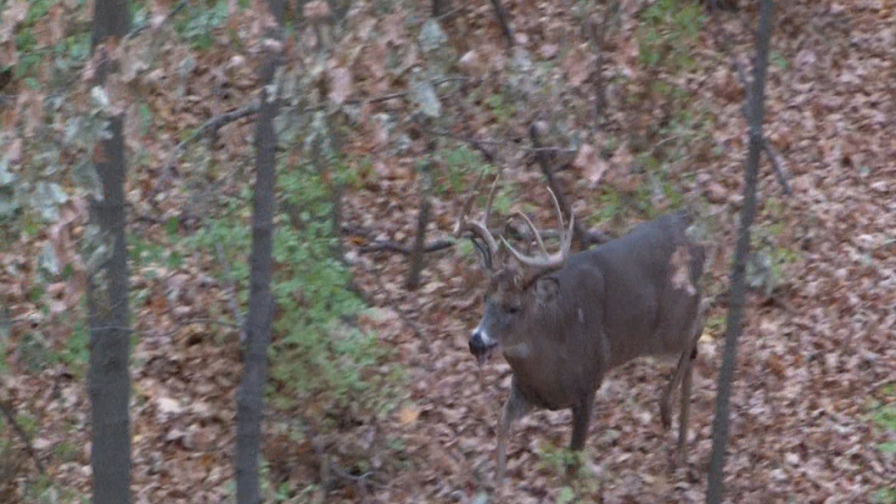 The Ghost Buck - The Excalibur Takes a Big Ohio Whitetail