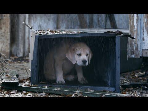 ✵ Канги - Собака (Video 2020) ✵